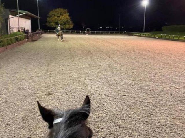 Hollow Farm Arena with sand & fibre arena surface